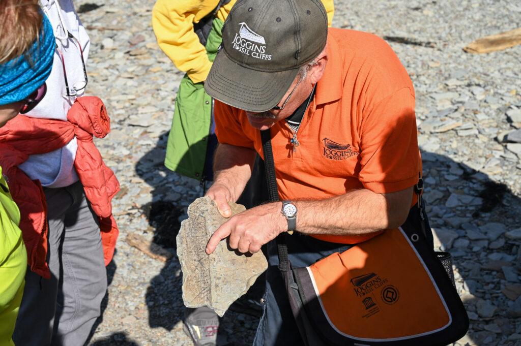 Joggins Fossil Cliffs